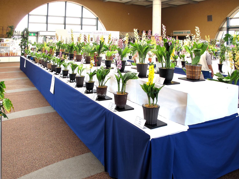 中央植物園春のラン展